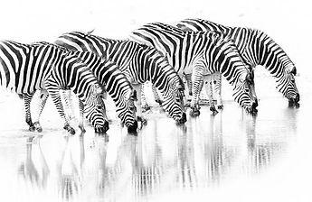 zebra-africa-photography.jpg
