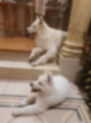 Kyus and Spooky.jpg
