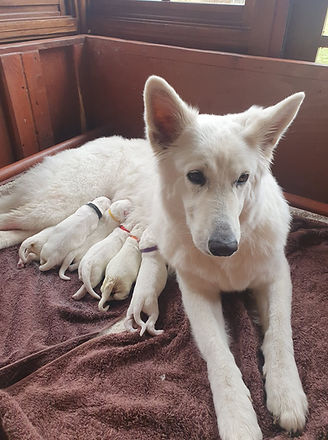 Storm and Puppies.jpg
