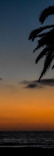 Palm Tree Ocean.jpg