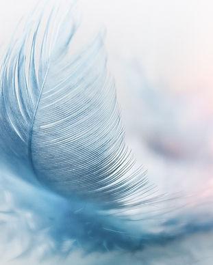 feather-3010848_960_720.jpg