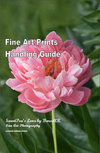 Fine Art Print Handling Guide Cover