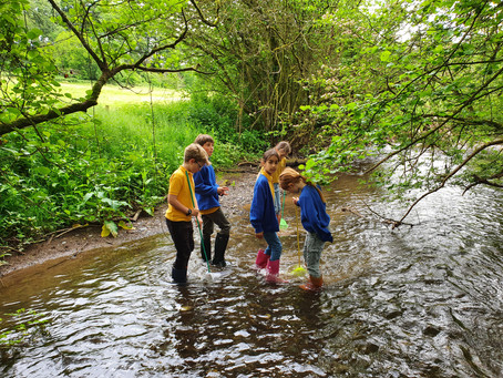 Bug Hunting… and more… in Somerset