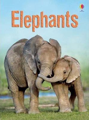 Elephants (Beginners)