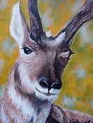 Eye of the Antelope.jpg