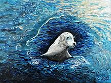 Harbour Seal.JPG