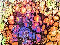 Neon Cells 8 X 8.JPG