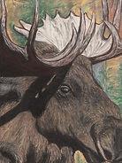 CFFA Moose.jpg