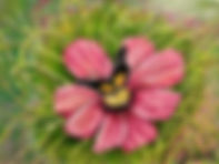 Butterfly Garden Best.jpg
