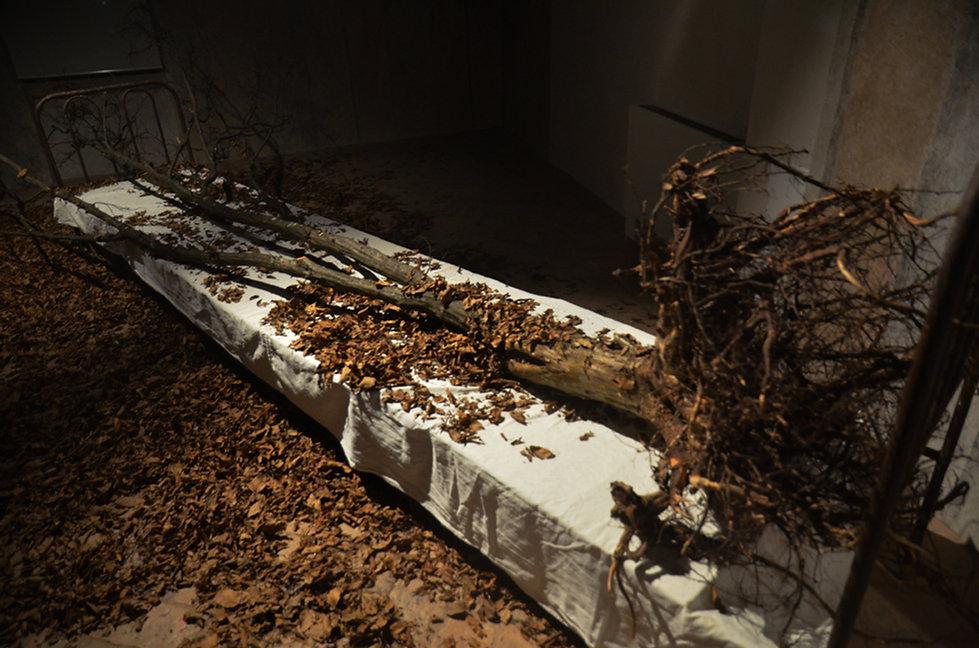 Aegritudo_Naturae_museo.jpg