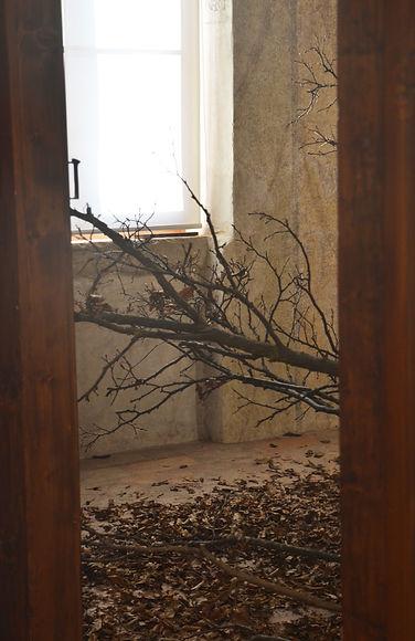 3Aegritudo_Naturae_museo.jpg