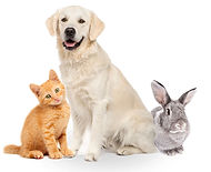 multi-pet-image.jpg