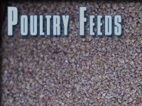 poultry-feeds.png