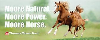 Horse-Page-Header-1-1200x485.jpg