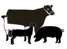 market-lamb-silhouette-2.jpg
