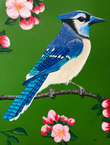 Blue Jay in Cherry Tree