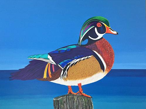 "Wood Duck fine art print, giclee 8"" x 10"""