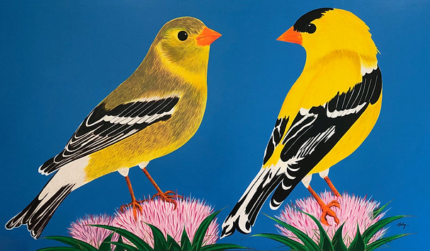 American Goldfinches - Lovebirds