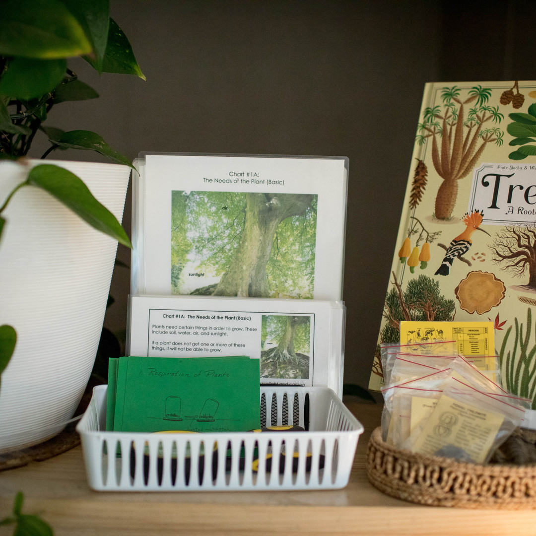 Trees and Seeds Books