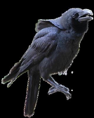 カラスの日 The crow's day ~9...