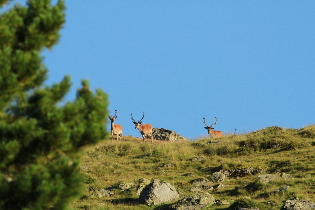 Hirsche am Horizont
