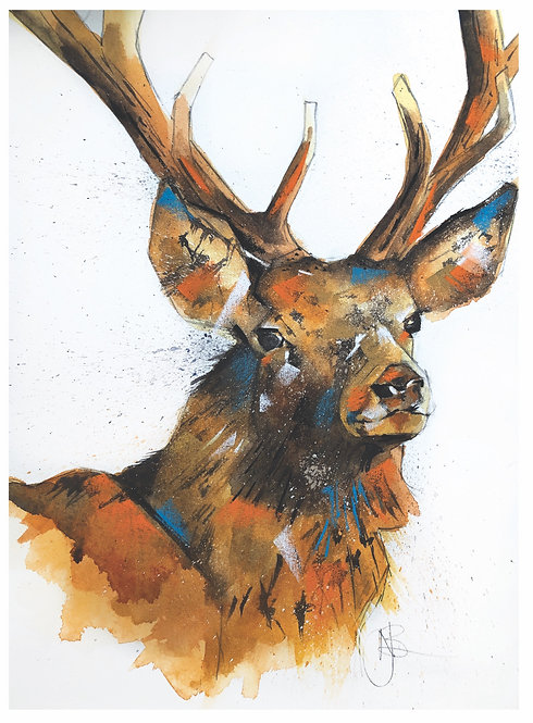 Shaw Stag