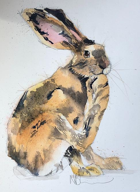 Herbie Hare