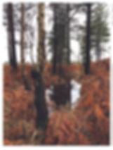 Ashley Heath water 1 up.jpg