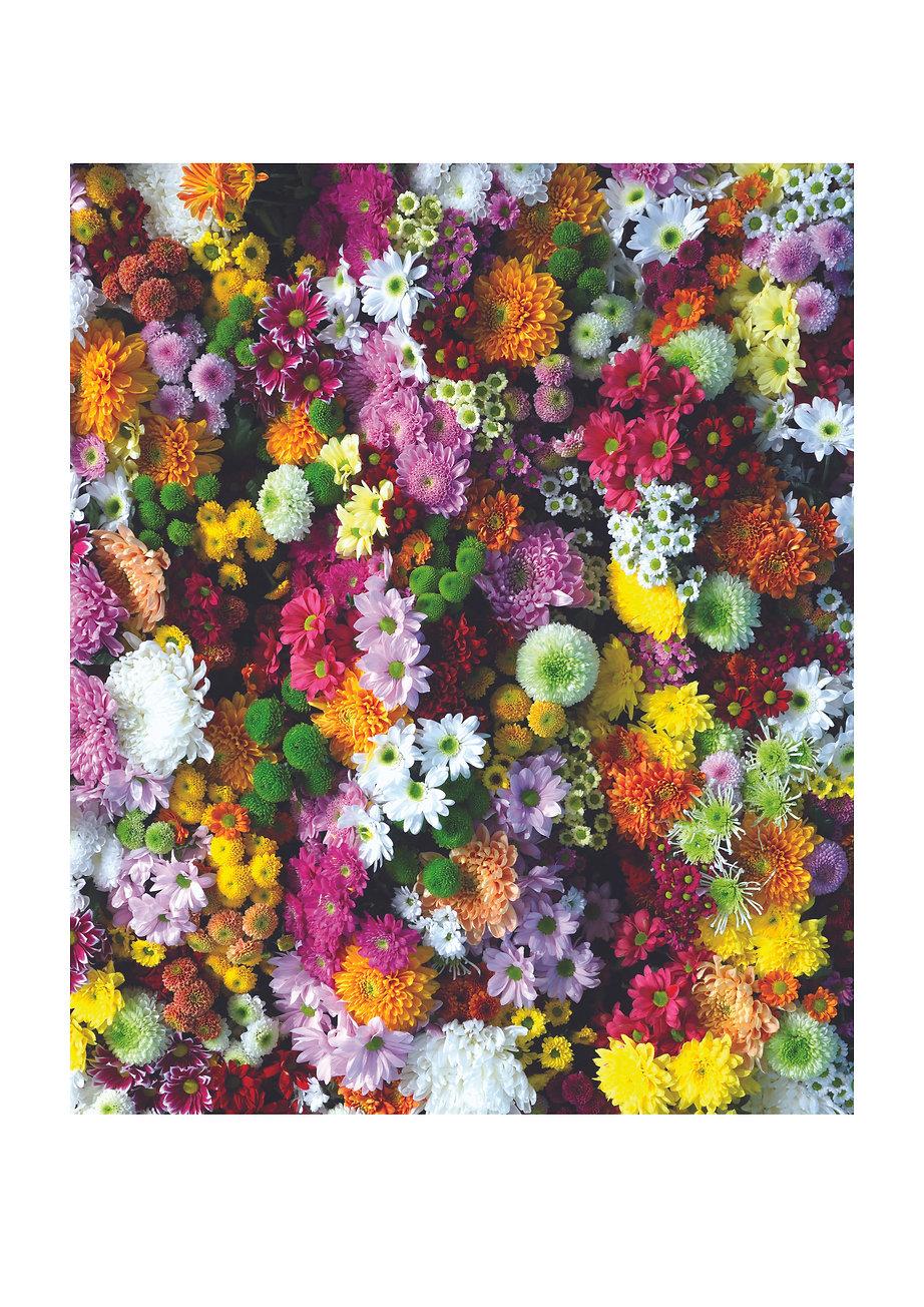 Flowers Image.jpg