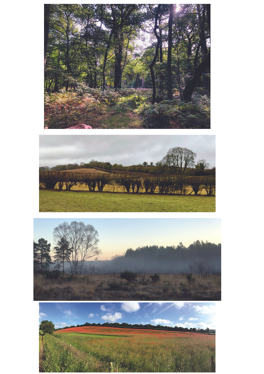 Multi Landscape images.jpg