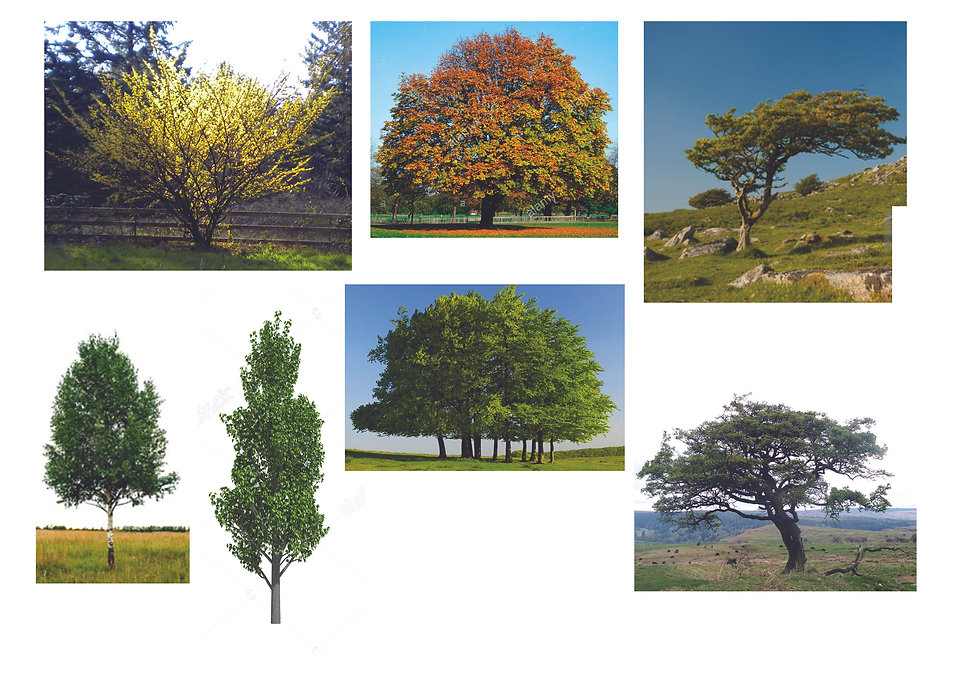 Tree Images for lesson.jpg