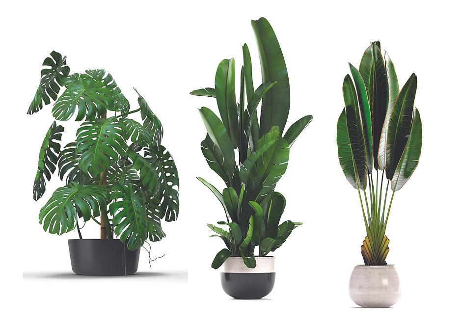 Plants contor drawing.jpg