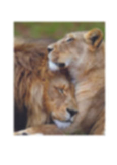 two lions.jpg