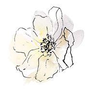 Side Flower.jpg