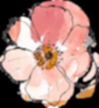 Centre Peach Flower.png