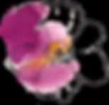 Burgundy Centre Flower.png