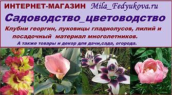 цветы почтой, клубни георгин, гладиолусы, лилии, пионы, многолетники, фонтаны