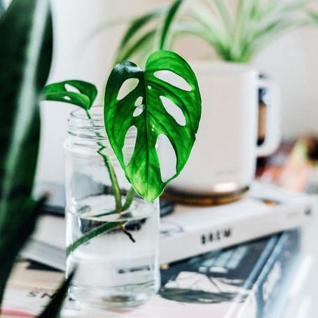 Plant Propagation 101