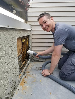 Pesticide Free and Environmentally Friendly Bee Nest Removal