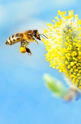pollen pants 2.png