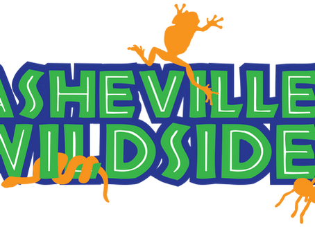 Welcome to Asheville Wildside (AKA A Work in Progress)