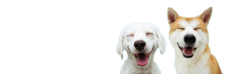 smiling dogs.png