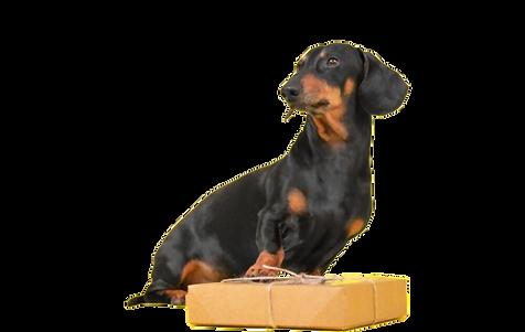 subscription dog.png