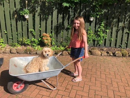 The Story so far... how a 10 year old created a Dog Deli