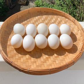 ไข่ดองเค็ม