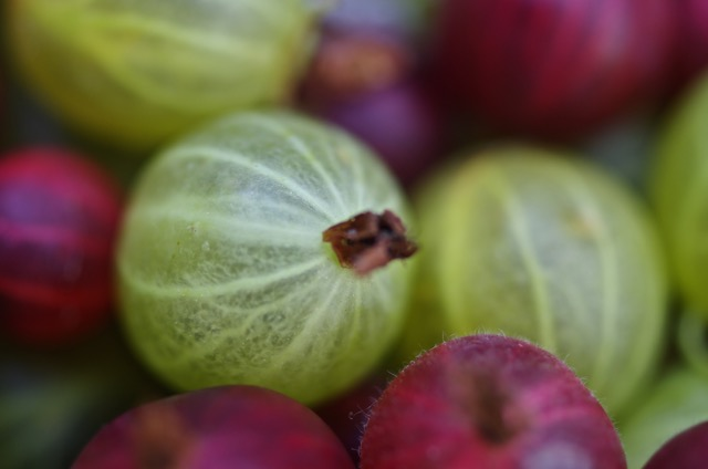 Goose berry 4