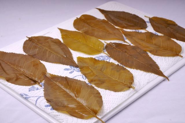 Papertowel dry Sakura leaves