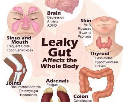 Probiotics What are the Benefits