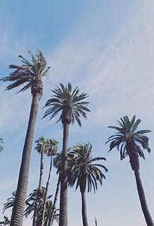 california-low-angle-photography-low-ang