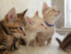 kittens jan 2019.JPG